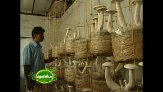 Success story of mushroom cultivation