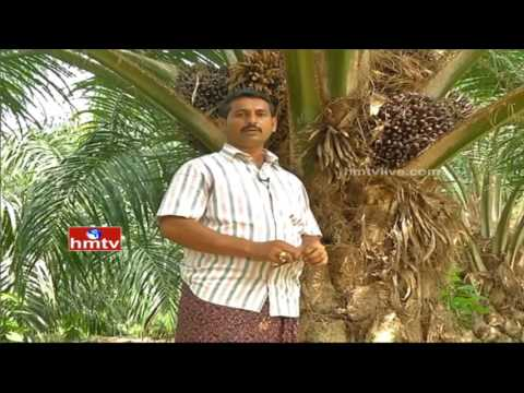 Nela Talli | watch special program on OIL FAM Crop by khammam district | HMTV