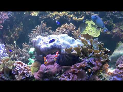 National Aquarium Maryland Full Tour Review 2018