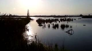SWAROSKY RIET VELL. PARC NATURAL. BEBES ORENETES.(2)