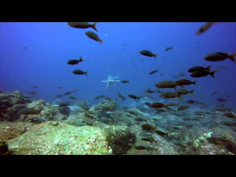 Galapagos   An Underwater Adventure
