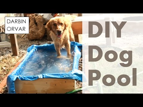 Can You Build a Pool for your Dog?