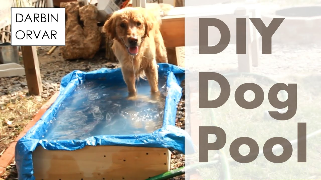 Can you build a pool for your dog youtube for Build my pool