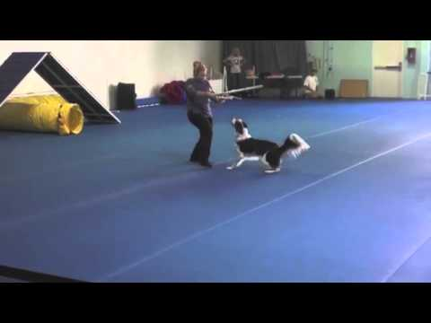 Star Wars - Canine Freestyle Routine (Twix & Pam)