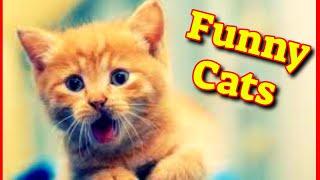 Cute Cat Videos 2021 Vol#9  Funny Cat Videos 2021  Cute Kittens