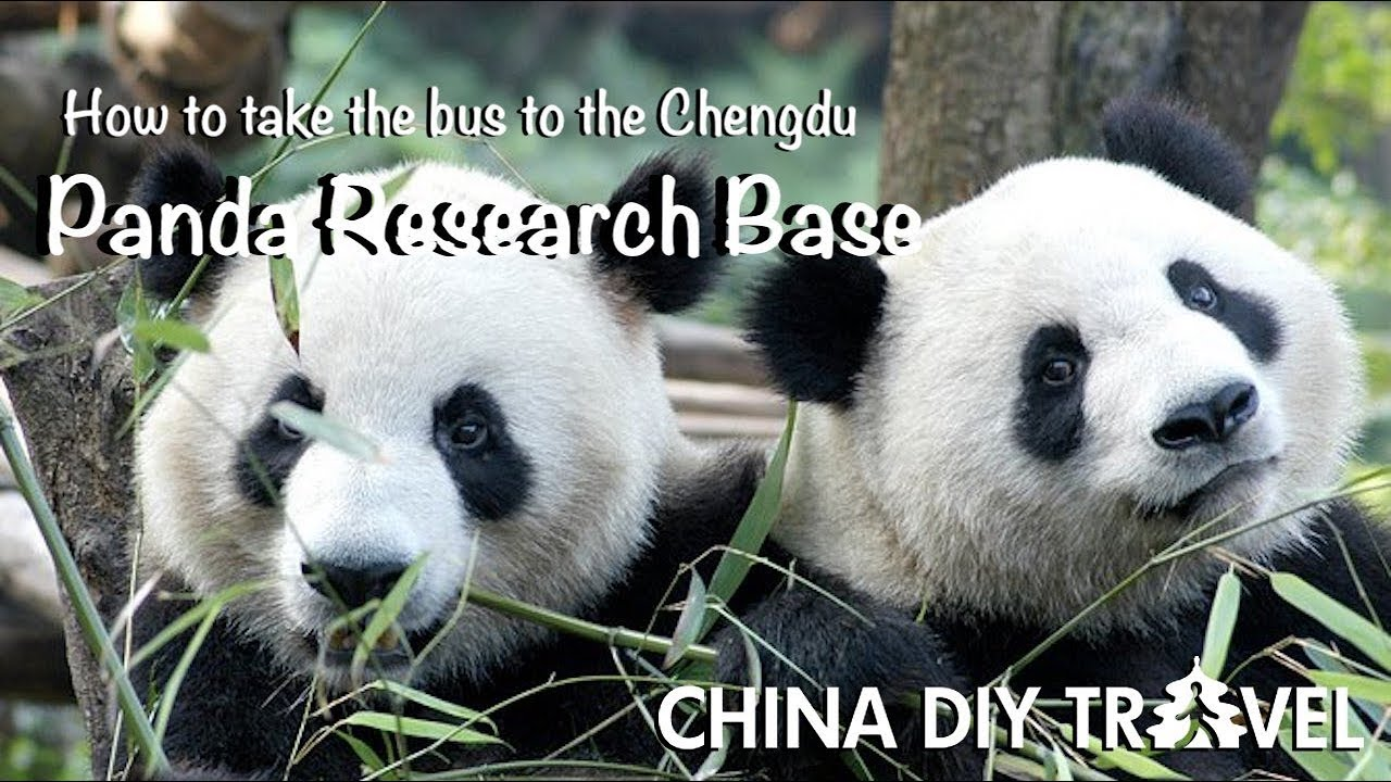 How To Go To The Chengdu Panda Base By Bus And By Subway Youtube