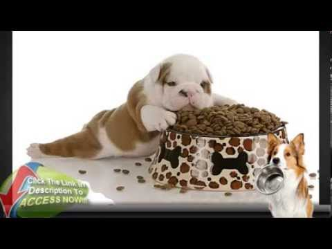 homemade-dog-food---do-your-homework-and-avoid-the-dangers