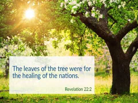 The Leaves On The Tree Go Out For Healing - Revelation