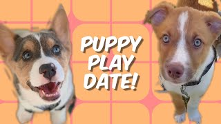 My Dog Has A Puppy Play Date!