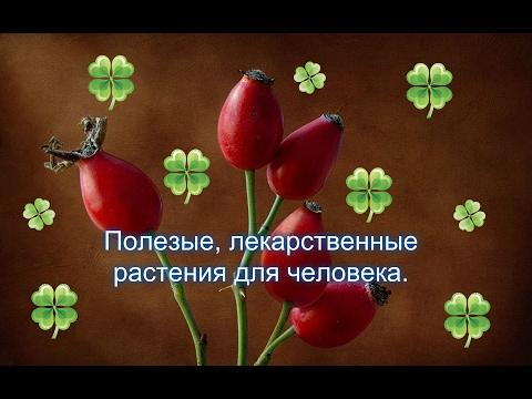 Полезные растения для человека . Топ 10 лекарственных растений  🌟