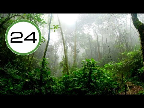 RAIN SOUND Soft in the JUNGLE☔🌴🐦 Rain and Birds WITHOUT Thunder to Sleep Study Relax