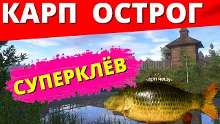 КАРП СУПЕРКЛЁВ Ст ОСТРОГ НОВАЯ ТОЧКА НОВАЯ НАЖИВКА РУССКАЯ РЫБАЛКА 4 Russian Fishing 4 РР4