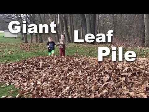 Autism| The Best Leaf Pile of the Year