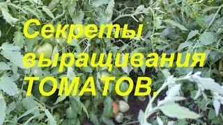 Мои секреты выращивания томатов.(В этом видео делюсь своими секретами выращивания томатов. О пасынковании. Что делать, если томаты все же..., 2015-07-28T12:53:52.000Z)