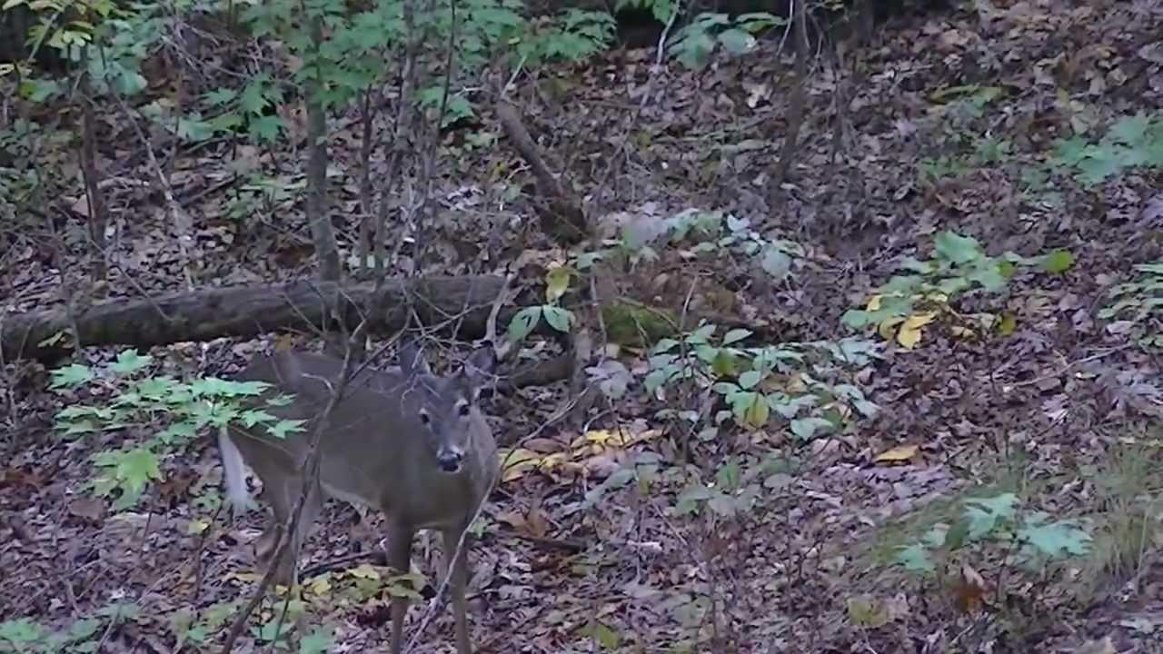 Deer hunting pickens south carolina youtube for R kitchen south carolina