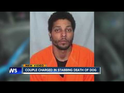 Dog stabbing by couple