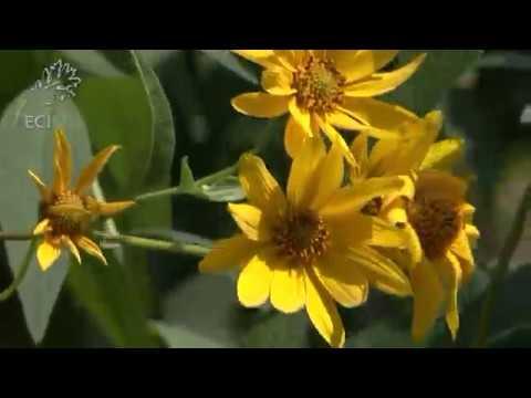 pollinator-pockets