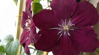 ЭКСКУРСИЯ ПО ПОДОКОННИКАМ  Мои комнатные цветы и растения ЦВЕТЫ НА ПОДОКОННИКЕ3 сенсационная новость