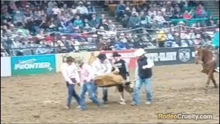 "Denver Rodeo's ""Humane Care"" Promise is a Lie"