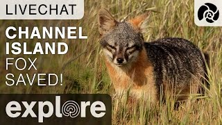 California's Channel Island Fox Removed From The Endangered Species List - Live Chat thumbnail