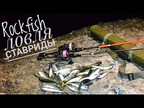 Морская рыбалка.Ловля ставриды, Черноморск. Rockfish.