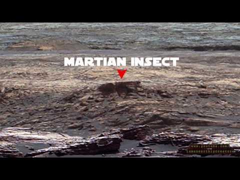 Mars Hieroglyphs Humanoids Animals Water