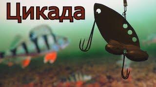 Как сделать цикаду для зимней и летней рыбалок?