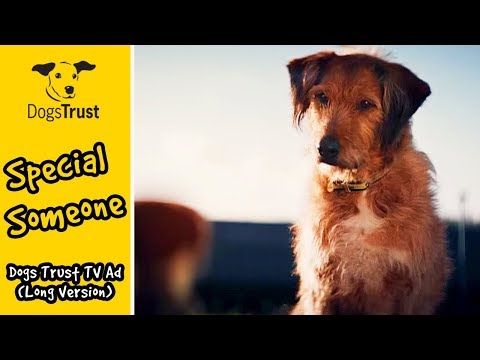 Dogs Trust TV Ad #specialsomeone long version