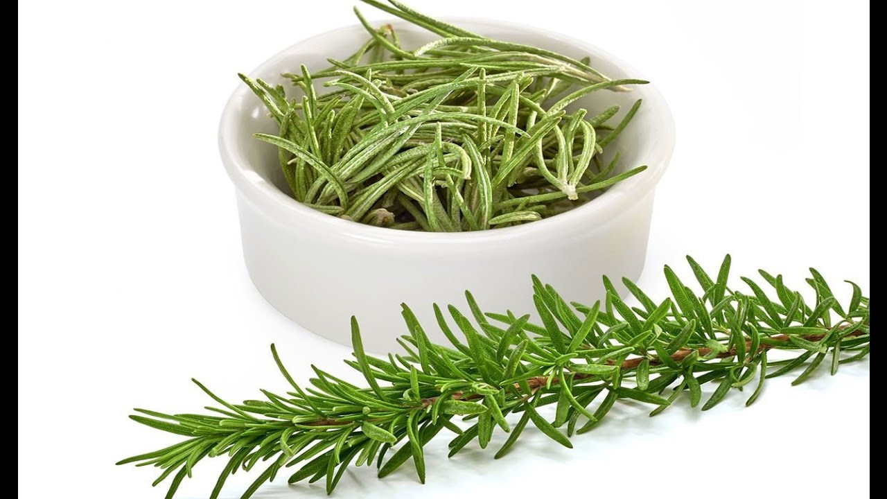 taking a look at rosemary Table of contents benefits side effects drug interactions rosemary is a fragrant evergreen herb native to the mediterranean it is used as a culinary condiment, to make bodily perfumes, and for its potential health benefits.
