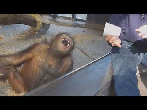 Top 10 animals react to magic tricks (Animals being tricked by magic tricks)