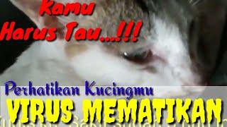 Virus Kucing Paling Mematikan , Waspadalah !!!