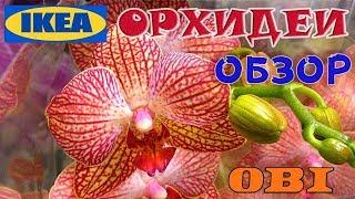 Свежайший завоз орхидей в ИКЕА | Орхидеи в ОБИ | Обзор | Орхидеи IKEA, OBI