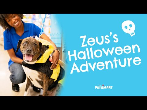 Zeus's Halloween Adventure: Trick or Treating for Dogs | PetSmart