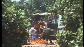 Dilivizio 1991 Xvid Hun NoGrp