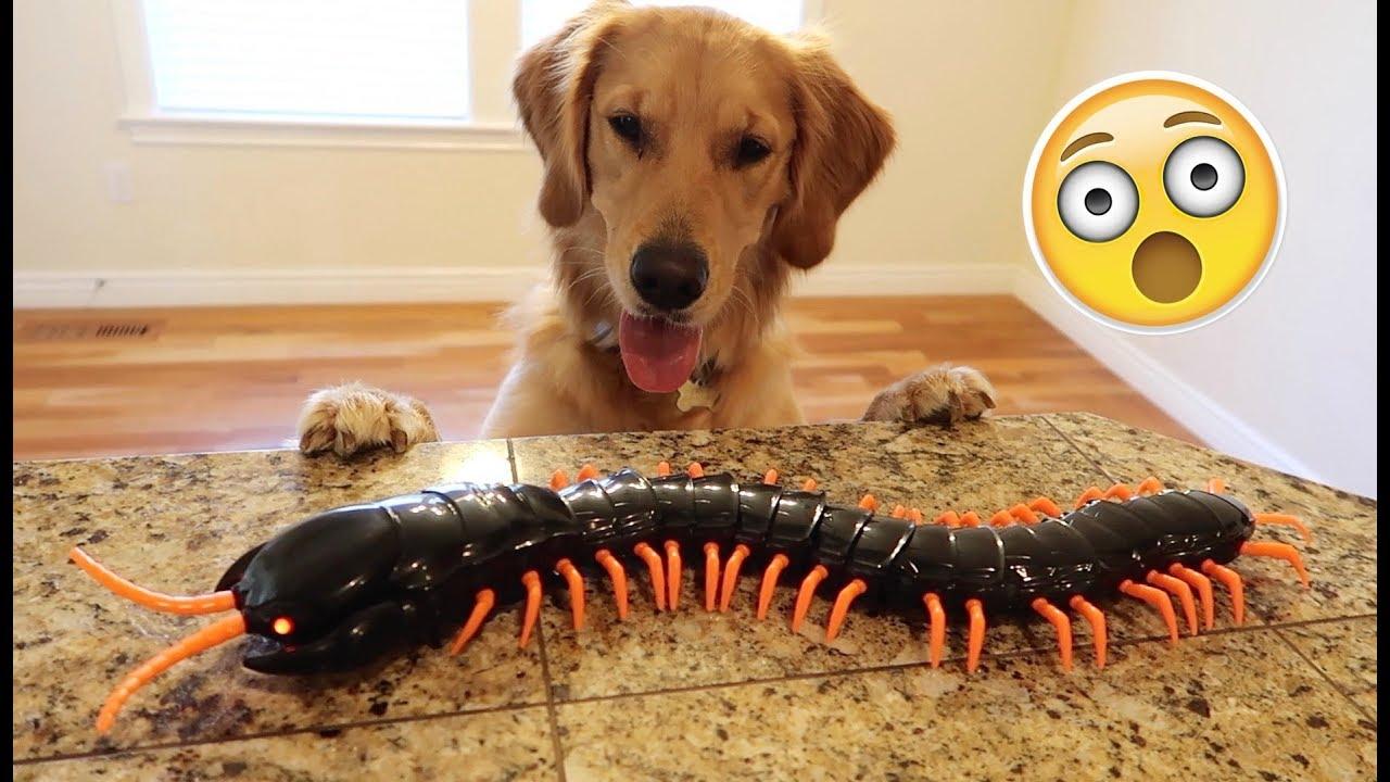 Dog Toy Centipede