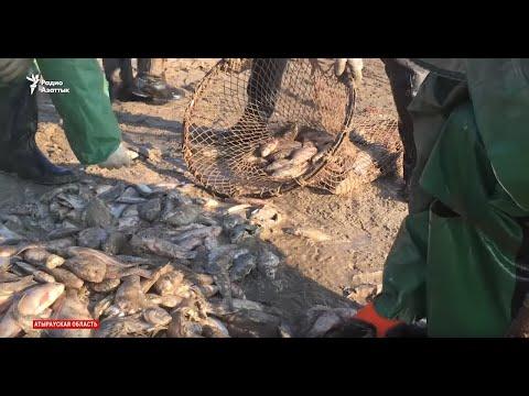 Гибель рыбы в Урале