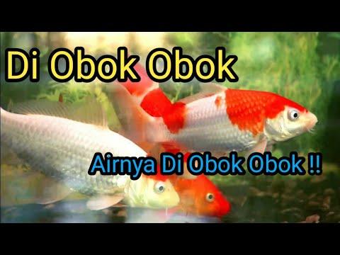 Lagu Anak - Di Obok Obok Airnya Di Obok Obok