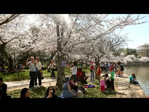 Firefighters compete at 2015 Cherry Blossom Festival from YouTube · Duration:  5 minutes 17 seconds