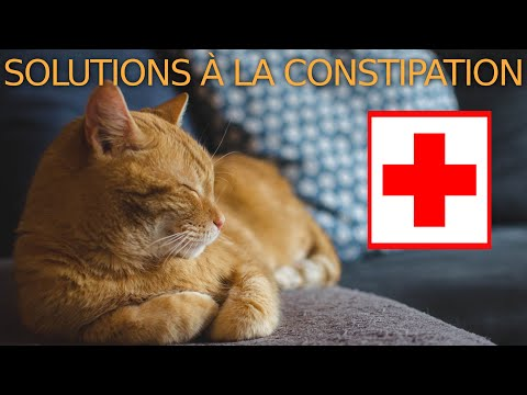 ⚕️🐈 Comment Soigner Un Chat Constipé: 9 Solutions Sans Ordonnance!