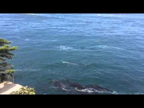 Whale at Cape Flattery