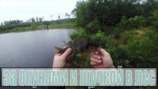 Рыбалка в дождь на лесных карьерах Щука и хороший окунь на блесну