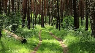 №2 Звуки природы релакс видео музыка природа звуки леса