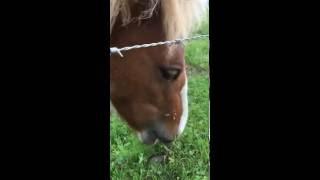 馬子が真剣に草を食う!そこへ仲間が乱入!!さあ、どうなる!?(どうも...