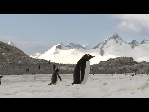 Hungry Penguins Chase Antarctic's Shifting Krill
