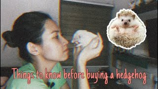 Things To Know Before Buying A Hedgehog Philippines