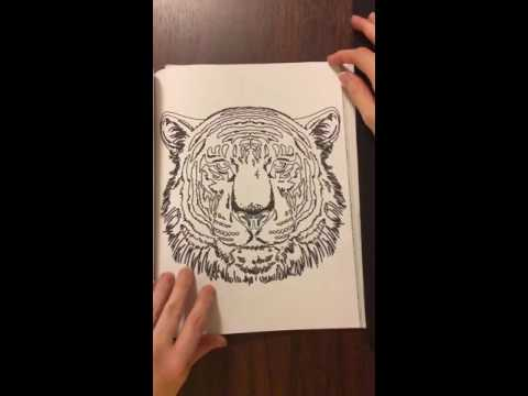 Curious Cats And Kittens Coloring For Artists Book Review