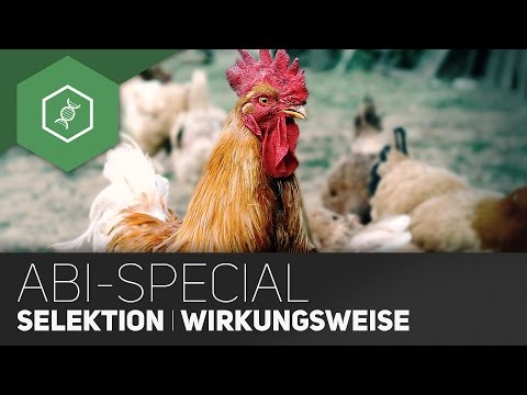 Evolution Abi-Special -