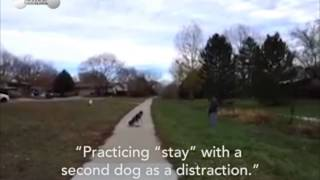 "Practicing ""stay"" With The Distraction Of Another Dog"