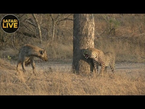 safariLIVE - Sunrise Safari - September 26, 2018