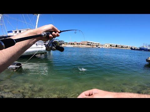 Marina Bream Fishing & Handline Kingfish!